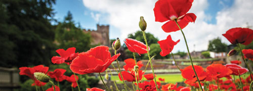 Poppies and Tamworth Castle